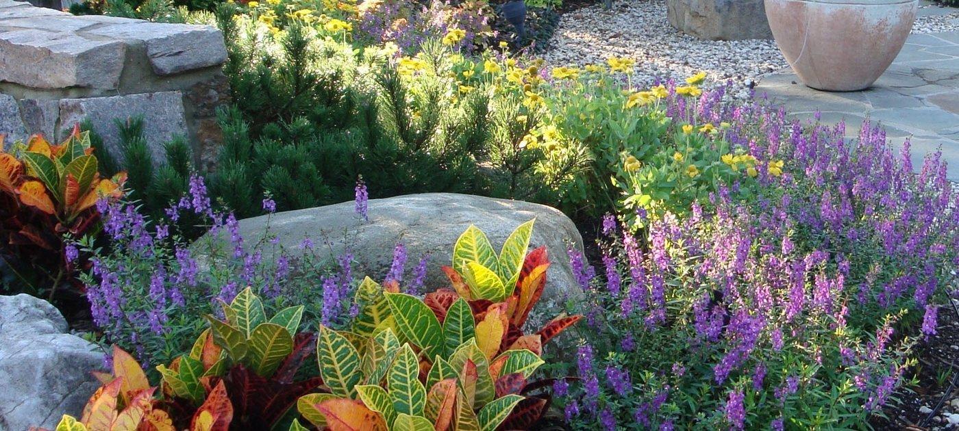 Croton-Angelonia-texture