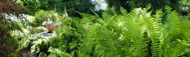 fern-pine-stone
