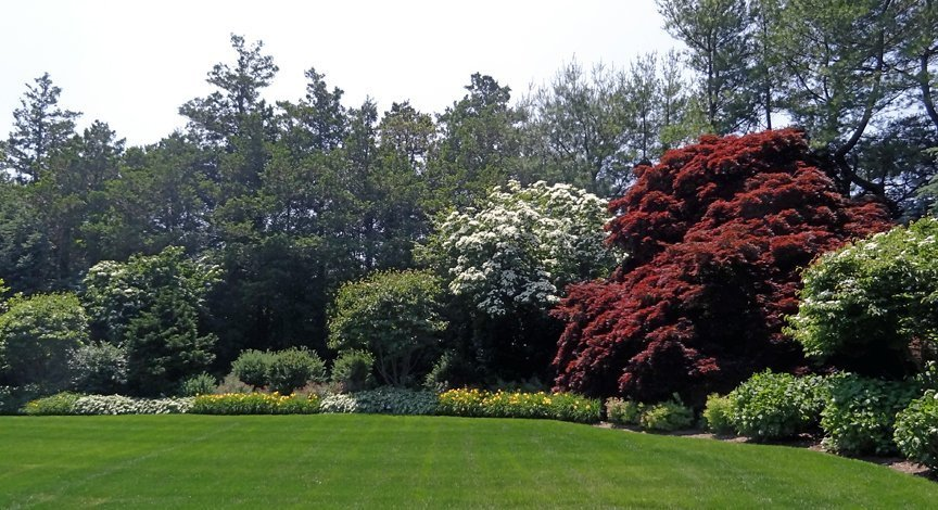 border_shrubs_trees_flowers_hydrangea_japanese_maple_LG