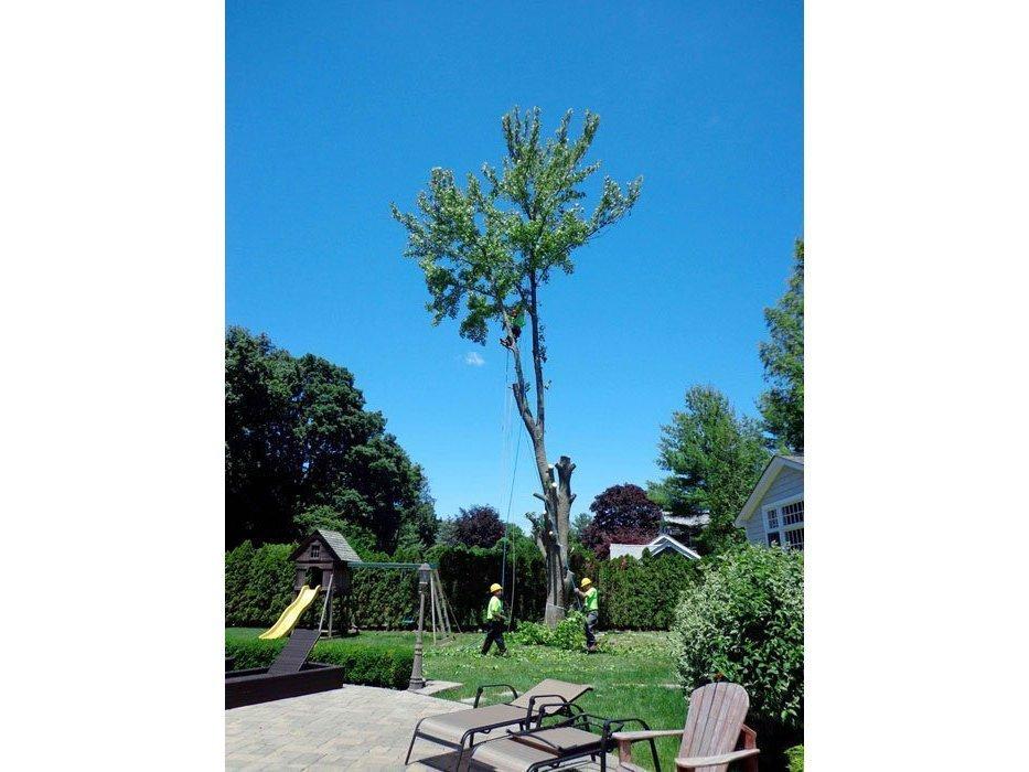 06_Tree-RemovalW