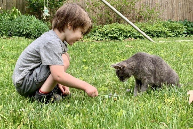 child cat safe lawn