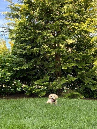 dog lawn safe play