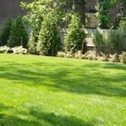 greener lawn kids backyard dog